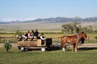 Miller_Wagon Ride Canda Wedding.jpg