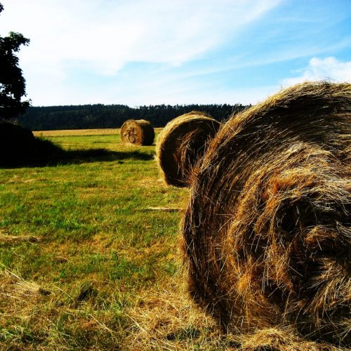 Bails Of Hay spread across ranchland fields
