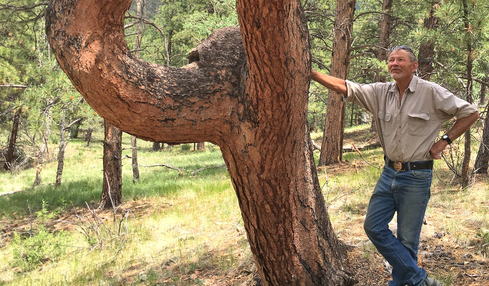 The Utes and Culturally Modified Trees